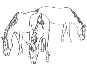 skizze pferde